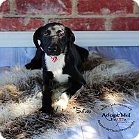 Adopt A Pet :: SHILOH - Lubbock, TX
