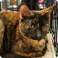 Adopt A Pet :: Smores savors her solitude but in few days she wil - Lyons, IL