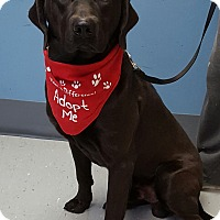 Adopt A Pet :: Ozzie - Maryville, IL