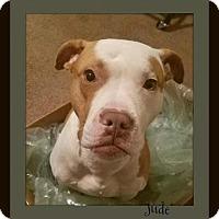 Adopt A Pet :: Jude - Memphis, TN