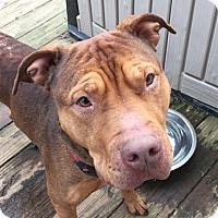 Adopt A Pet :: Dean - Glenolden, PA