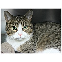 Adopt A Pet :: Meadow - Forked River, NJ