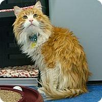 Adopt A Pet :: Paisley - Lakewood, CO