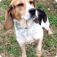 Adopt A Pet :: CARLIE/Fall in Love with Her! - Glastonbury, CT