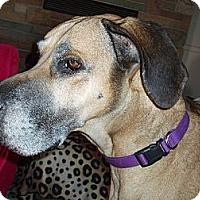 Adopt A Pet :: Mickey Rooney - Phoenix, AZ