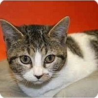 Adopt A Pet :: DORIS - SILVER SPRING, MD
