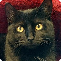 Adopt A Pet :: Ebony - Berkeley Hts, NJ