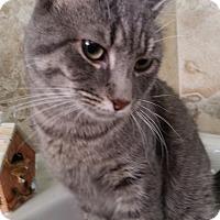 Adopt A Pet :: Aeron Greyjoy - Berkeley Hts, NJ