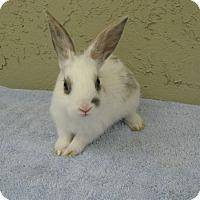 Adopt A Pet :: Kori - Bonita, CA