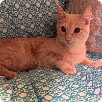 Adopt A Pet :: Reggae - Addison, IL