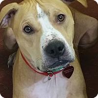 Adopt A Pet :: Mac - Elyria, OH