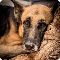 Adopt A Pet :: Fiji - Phoenix, AZ