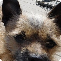 Adopt A Pet :: Booker - MINNEAPOLIS, KS