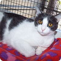 Adopt A Pet :: Princess - Grants Pass, OR