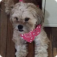 Adopt A Pet :: Benny - Palatine, IL
