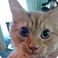 Adopt A Pet :: Dumpling - Morganton, NC