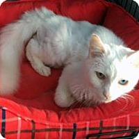 Adopt A Pet :: Beamer - Monroe, NC