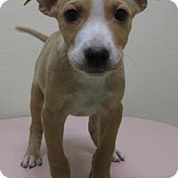 Adopt A Pet :: Milo - Gary, IN