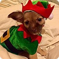 Adopt A Pet :: Sissy - Holly Springs, NC