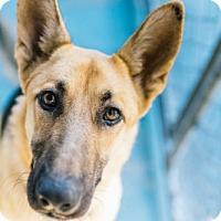 Adopt A Pet :: Montana - San Francisco, CA