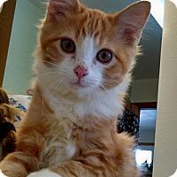 Adopt A Pet :: Sorrell - Divide, CO