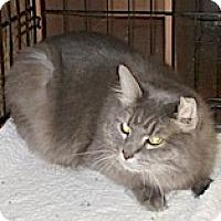 Adopt A Pet :: Graycee - Euclid, OH