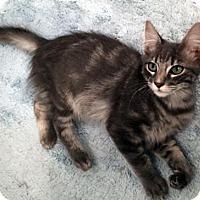 Adopt A Pet :: Benji - Spring, TX