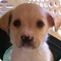 Adopt A Pet :: Baby Ruth - Bloomington, IL