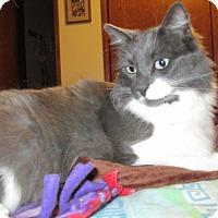 Adopt A Pet :: 'Spinn' Special Needs - wobbler | CH - HILLSBORO, OR