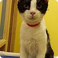 Adopt A Pet :: Lambo - Mobile, AL