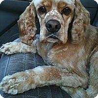 Adopt A Pet :: WRIGLEY - Tacoma, WA