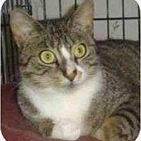 Adopt A Pet :: Gabby - Plainville, MA