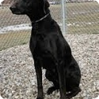 Adopt A Pet :: Izzy - Lewisville, IN