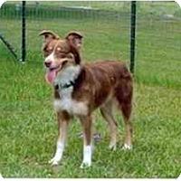 Adopt A Pet :: Jenny - Orlando, FL