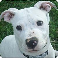 Adopt A Pet :: Beemer - Cleveland, OH