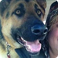 Adopt A Pet :: Pele - Hamilton, MT