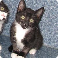 Adopt A Pet :: Winston - Harrisburg, NC
