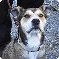 Adopt A Pet :: Zach - Enfield, CT