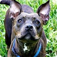 Adopt A Pet :: Nessie - Lake City, FL