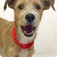 Adopt A Pet :: Selina - Mission Viejo, CA