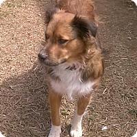 Adopt A Pet :: Hope - Mount Juliet, TN
