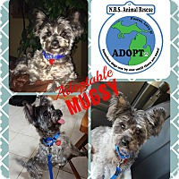 Adopt A Pet :: Mugsy - Troy, MI