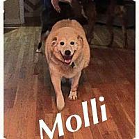 Adopt A Pet :: Molli - Woodinville, WA