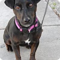 Adopt A Pet :: Kanika - Salt Lake City, UT