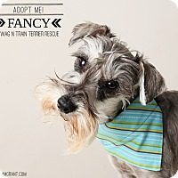 Adopt A Pet :: Fancy - Omaha, NE