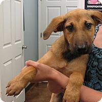 Adopt A Pet :: Mopar - Groton, MA