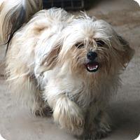 Adopt A Pet :: Sedona - Norwalk, CT