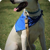 Adopt A Pet :: Prince - Richmond, VA