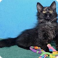 Adopt A Pet :: Hallie - Lenexa, KS
