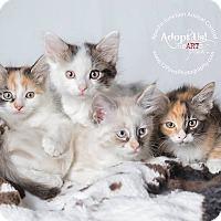 Adopt A Pet :: Allie, Alex, Andy, Addie - Apache Junction, AZ